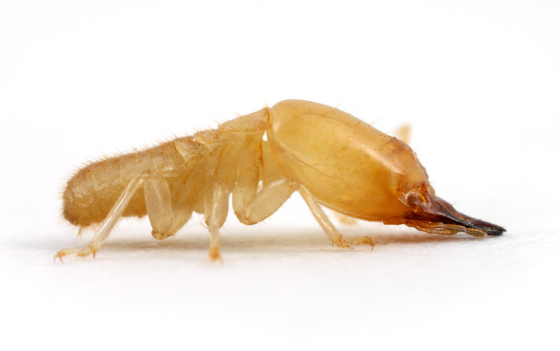 Various - Electro Bug Bites Vol. 5
